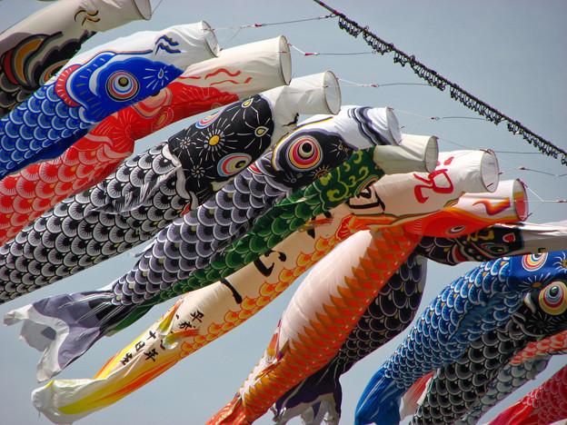 In Giappone il 5 maggio si celebra l'antica tradizione KOMODO NO HI per festeggiare tutti i bambini